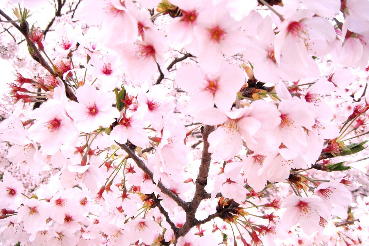 ◆4月:定休日のお知らせ◆
